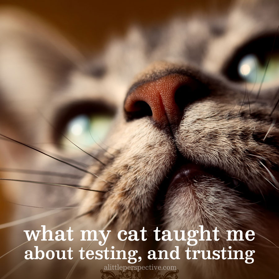 what my cat taught me about testing, and trusting | alittleperspective.com