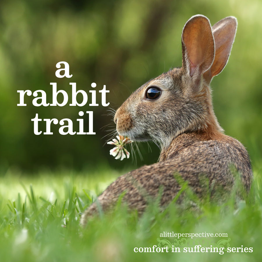 a rabbit trail | comfort in suffering | alittleperspective.com