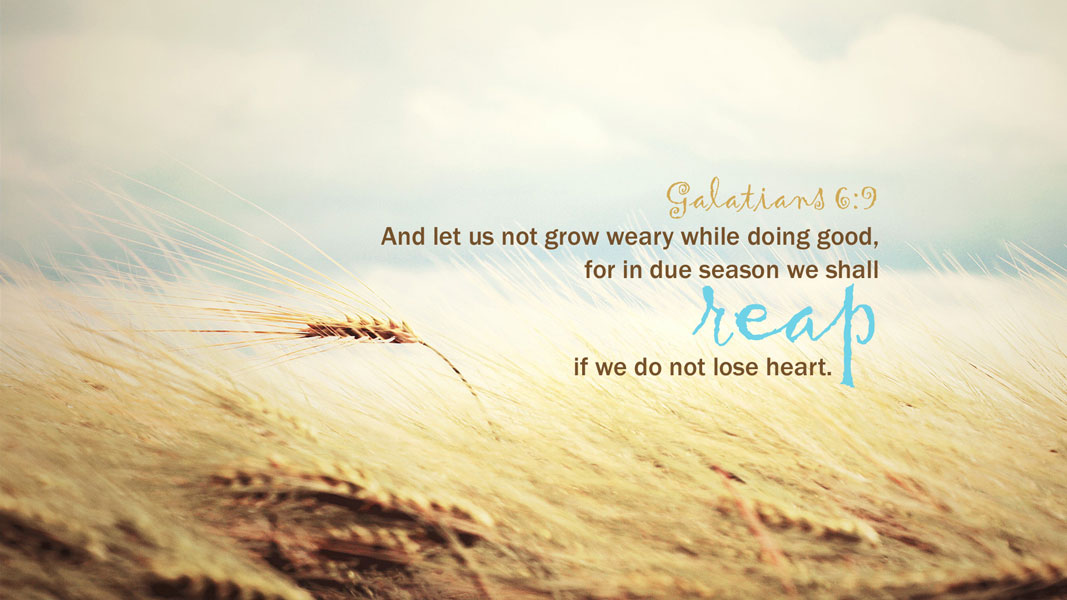 And let us not grow weary while doing good, for is due season we shall reap if we do not lose heart.