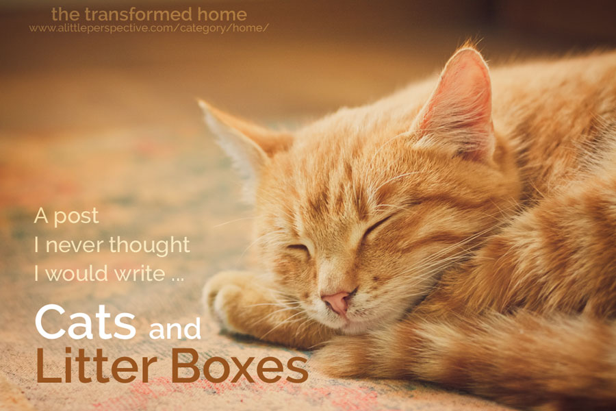 cats and litter boxes | the transformed home at a little perspective