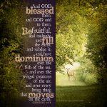 Gen 1:28 | scripture pictures at alittleperspective.com