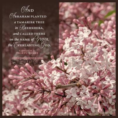 Gen 21:33 | scripture pictures at alittleperspective.com