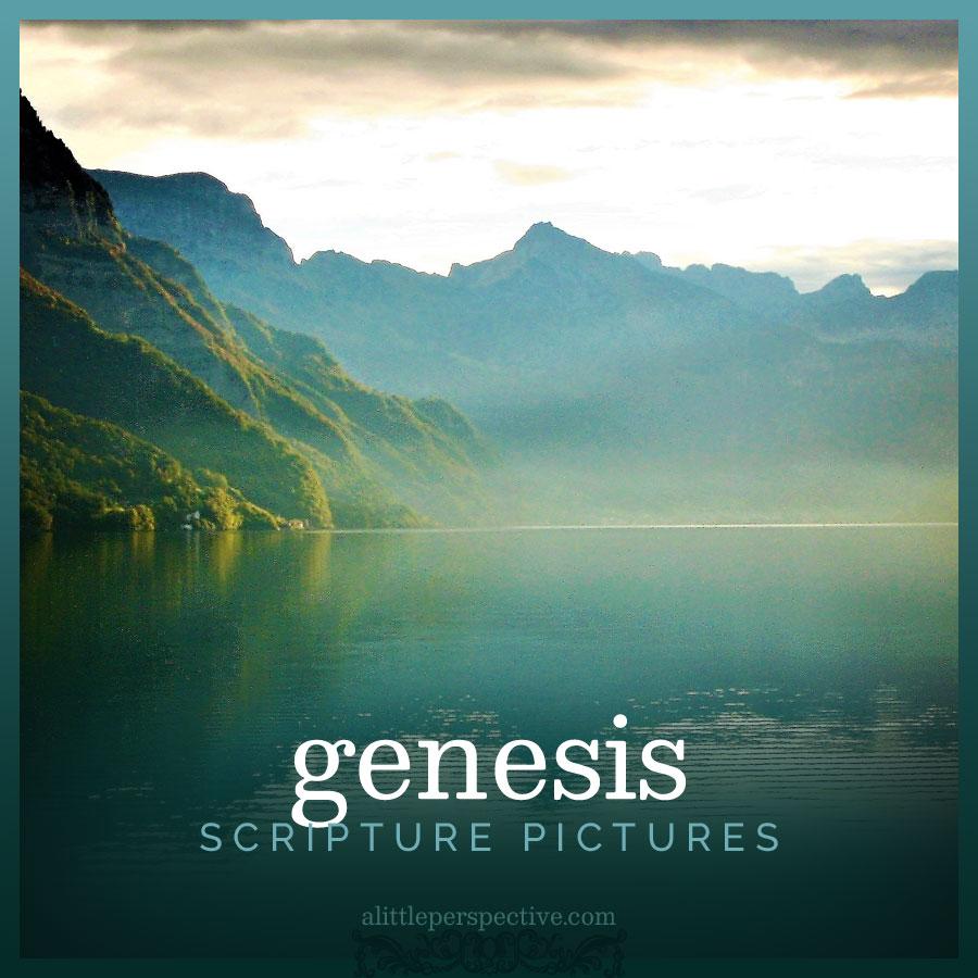 genesis scripture pictures | alittleperspective.com