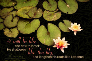 """""""I will be like the dew to Israel: He shall grow like the lily, and lengthen his roots like Lebanon."""""""