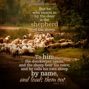 Joh 10:2   scripture pictures at alittleperspective.com