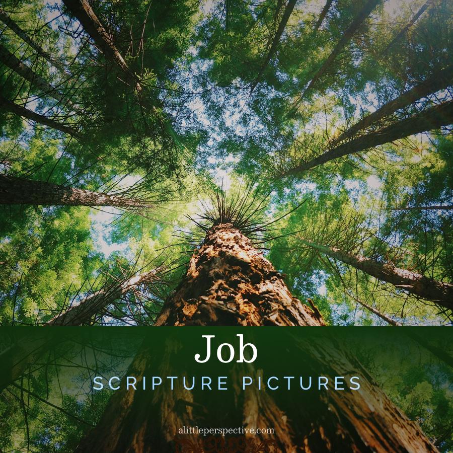Job Scripture Pictures   alittleperspective.com
