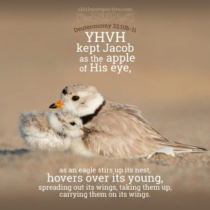 Deu 32:10b-11 | scripture pictures at alittleperspective.com