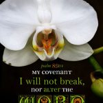 Psa 89:34 cell wallpaper | scripture pictures at alittleperspective.com