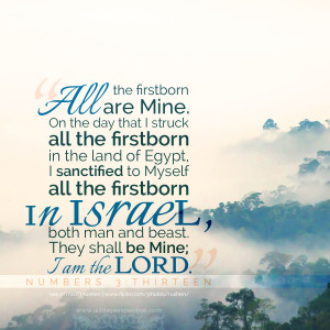 Num 3:13   scripture pictures at alittleperspective.com