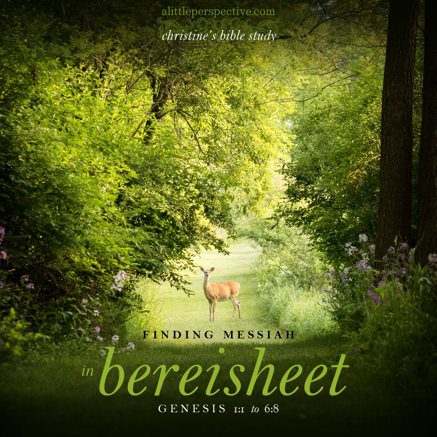 finding messiah in bereisheet, genesis 1:1-6:8 | christine's bible study at alittleperspective.com