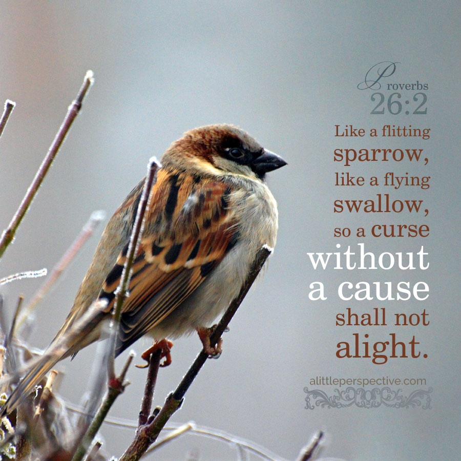 Pro 26:2 | scripture pictures at alittleperspective.com