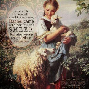 Gen 29:9 | scripture pictures at alittleperspective.com