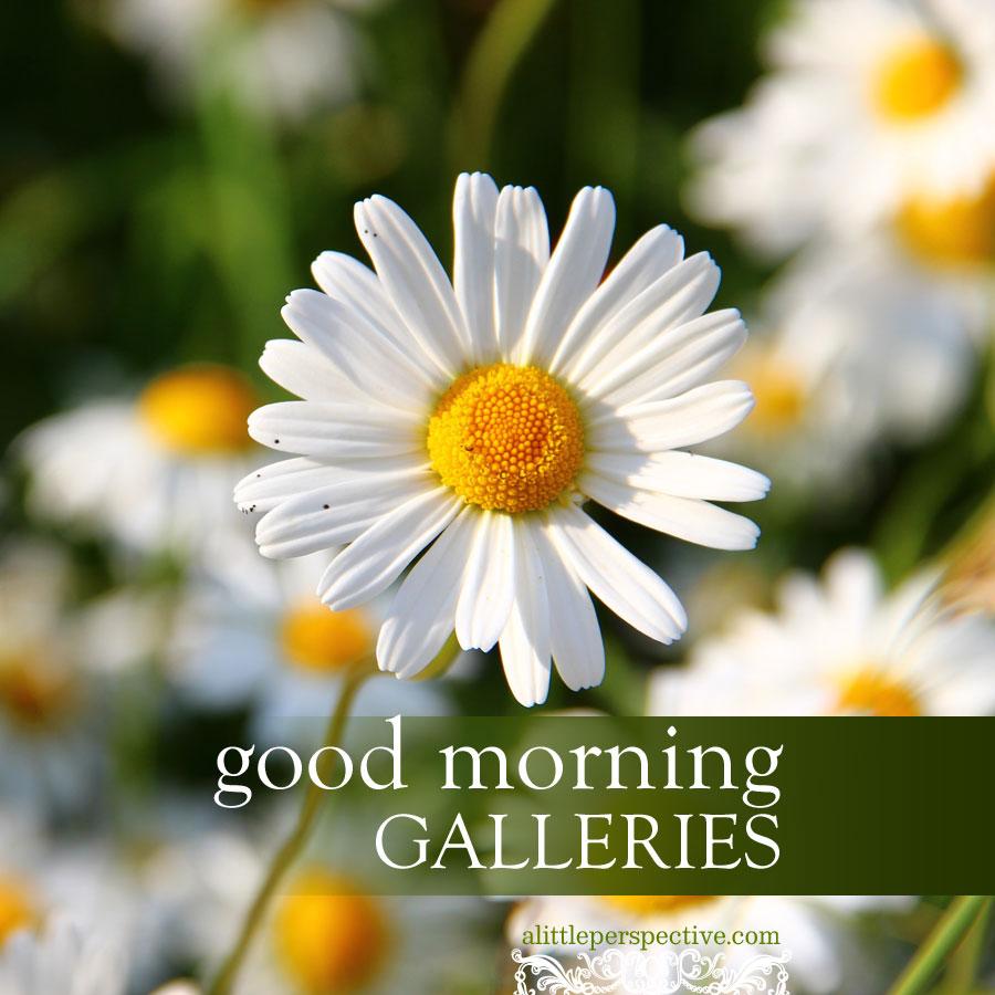 good morning galleries   alittleperspective.com