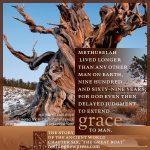 methuselah | Christine Miller @ alittleperspective.com
