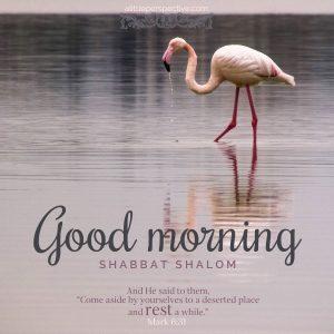 good morning shabbat shalom   daily blessings at alittleperspective.com