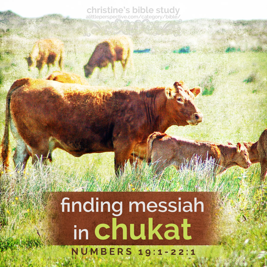 finding messiah in chukat