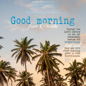 good morning from florida   daily blessings from alittleperspective.com