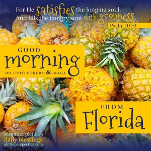 good morning from florida | good morning gallery at alittleperspective.com