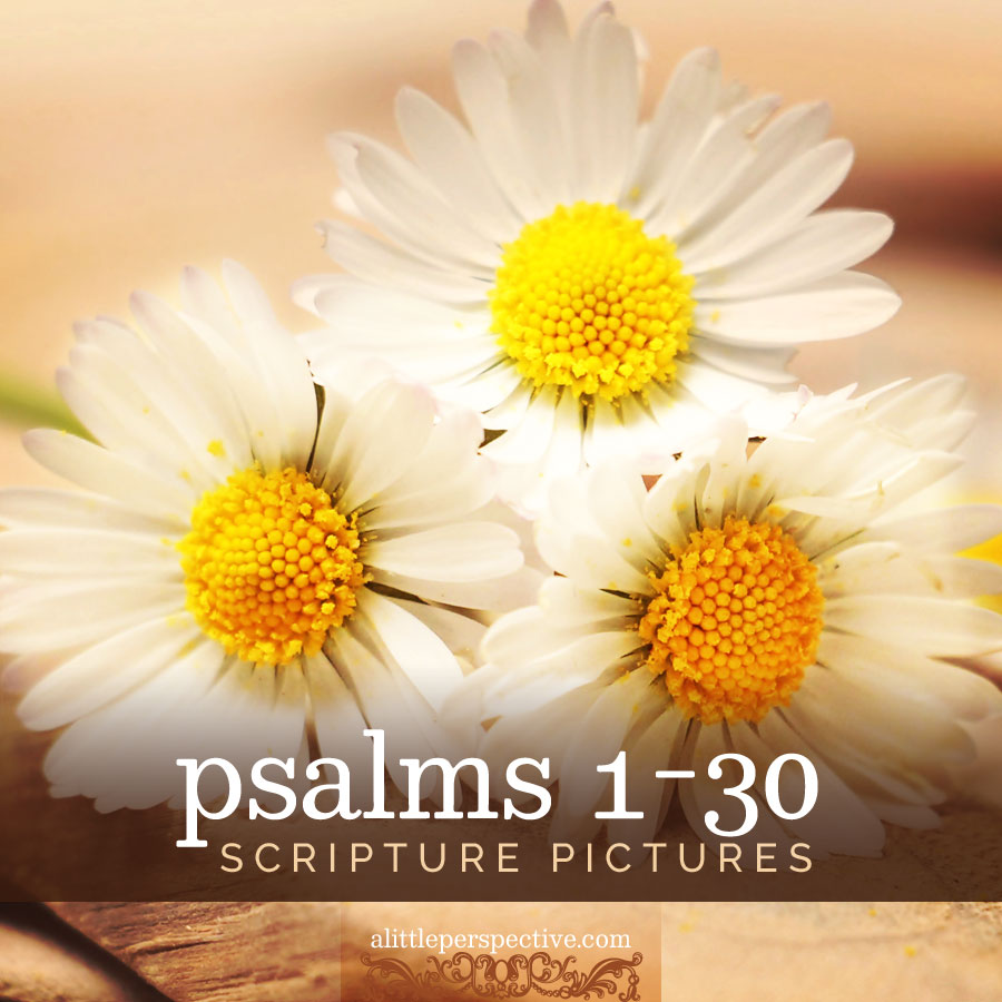 psalms 1-30 scripture pictures | alittleperspective.com