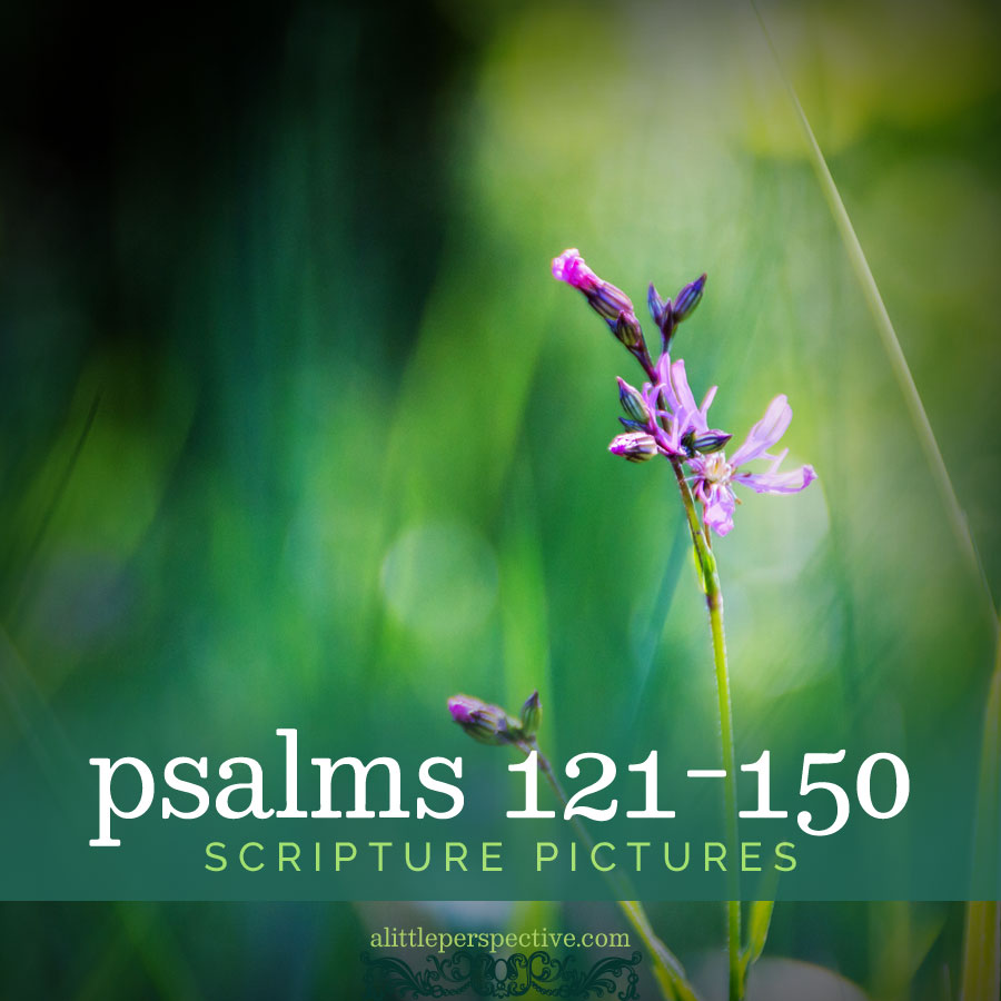 psalms 121-150 scripture pictures | alittleperspective.com