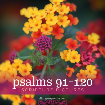 psalms 91-120 scripture pictures