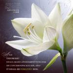 Lev 4:26b | Scripture Pictures @ alittleperspective.com