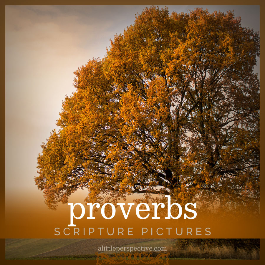 proverbs scripture pictures | alittleperspective.com