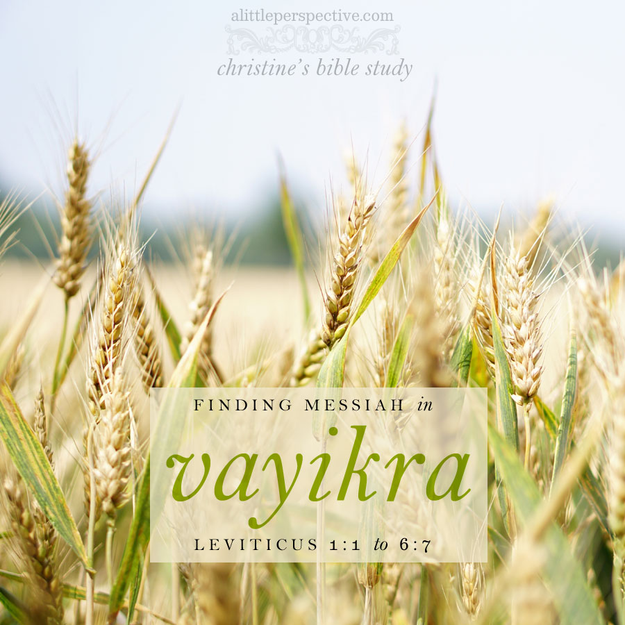 finding messiah in vayikra, lev 1:1-6:7 | christine's bible study at alittleperspective.com