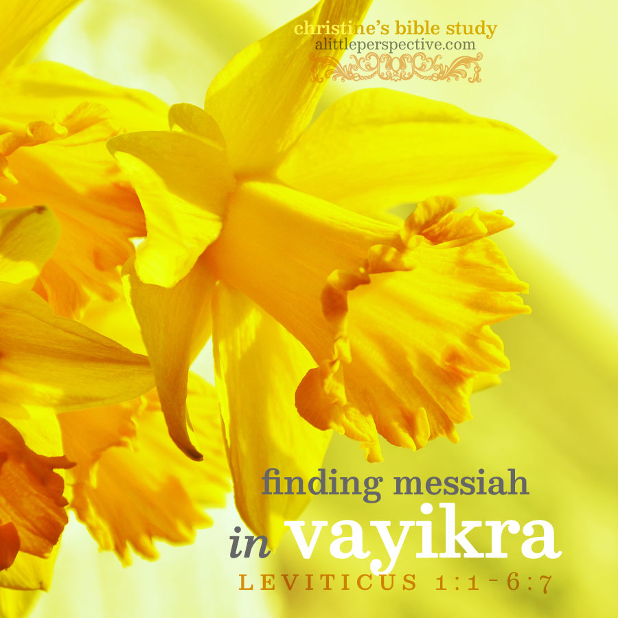 Finding Messiah in Vayikra | christine's bible study at alittleperspective.com