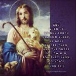 Joh 10:4 | scripture pictures @ alittleperspective.com