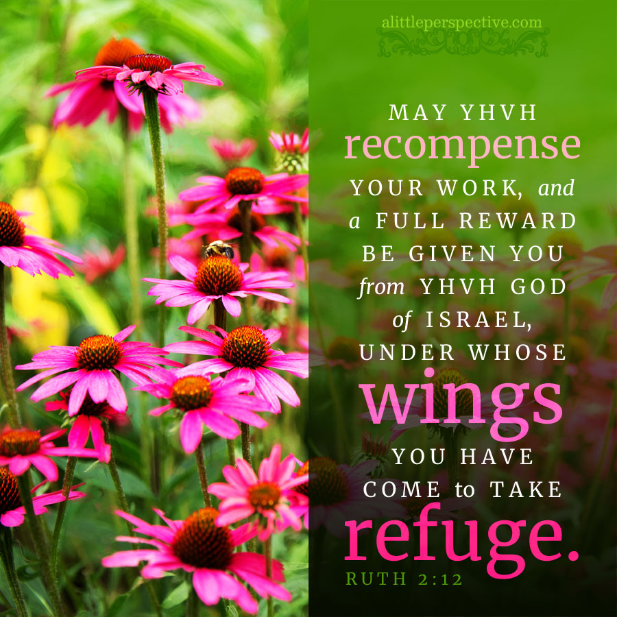 Rut 2:12   scripture pictures @ alittleperspective.com