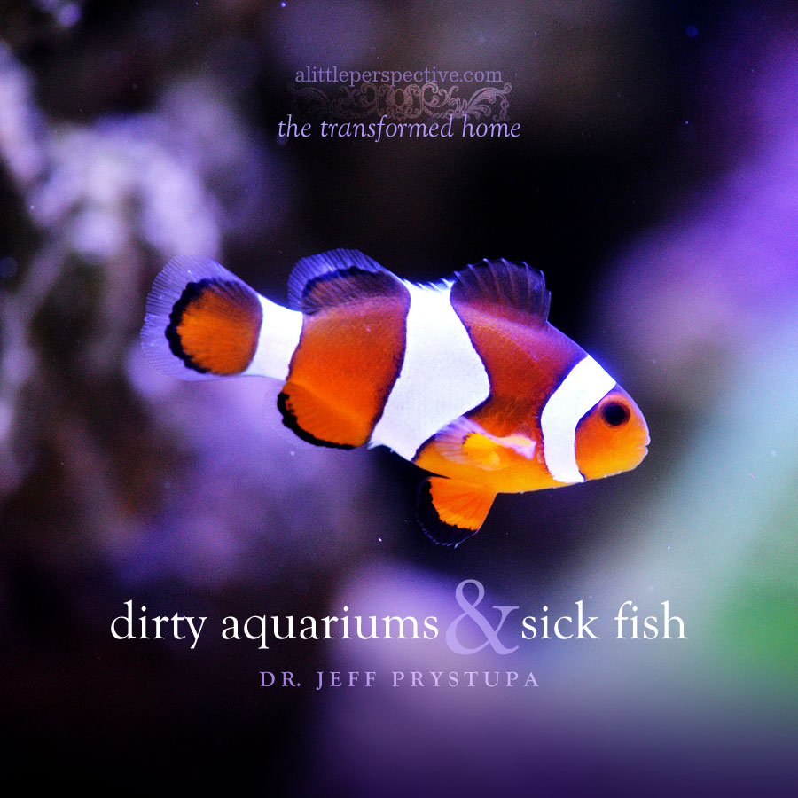 dirty aquariums and sick fish | dr. jeff prystupa | the transformed home at alittleperspective.com