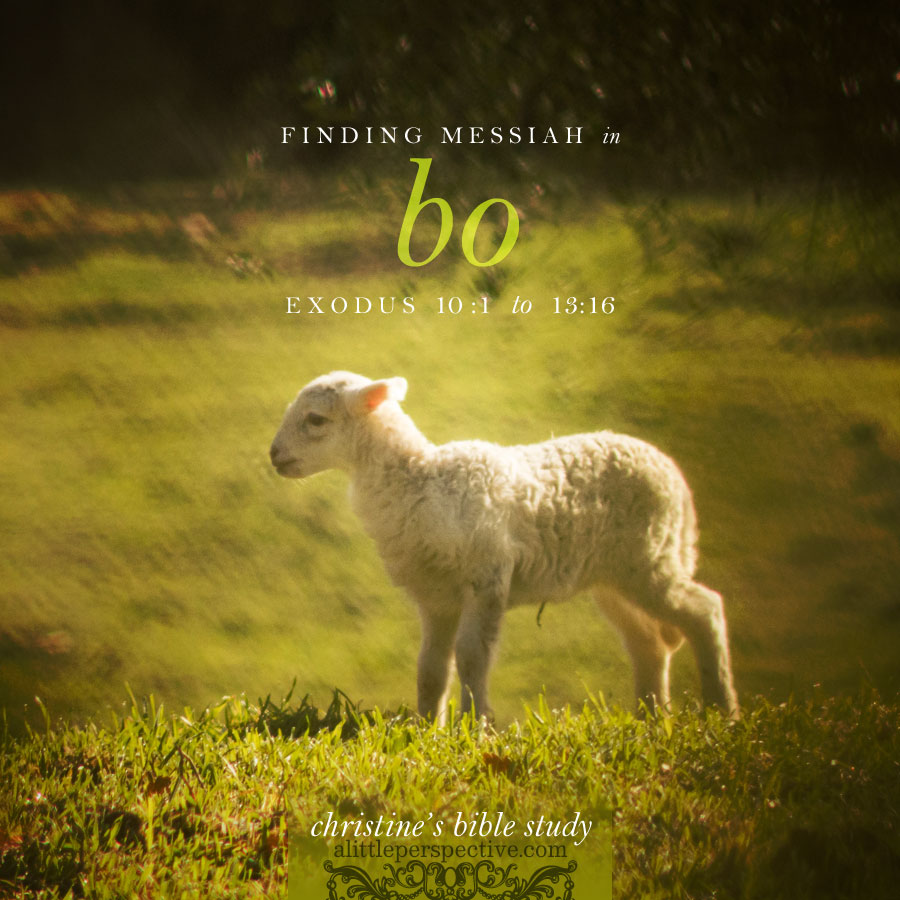 finding messiah in bo, exo 10:1-13:16 | christine's bible study at alittleperspective.com