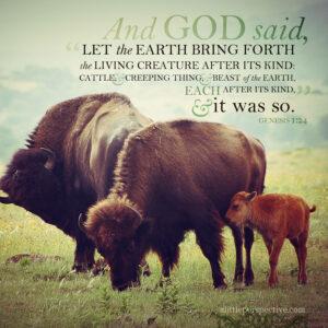 Gen 1:24   scripture pictures at alittleperspective.com