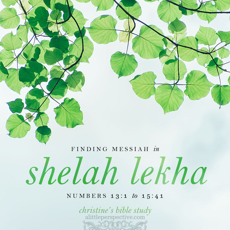 finding messiah in shelah lekha | christine's bible study at alittleperspective.com