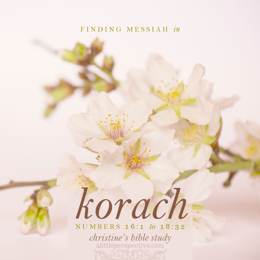 finding messiah in korach, num 16:1-18:32
