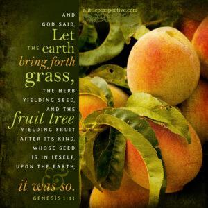 Gen 1:11   scripture pictures at alittleperspective.com