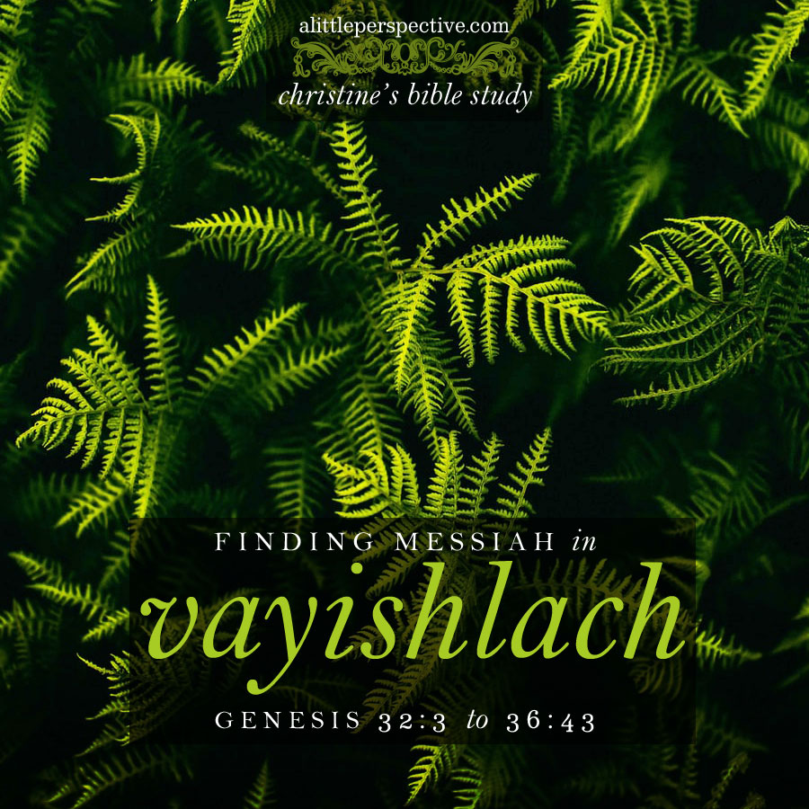 finding messiah in vayishlach, genesis 32:3-36:43 christine's bible study at alittleperspective.com
