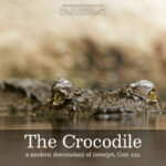 the crocodile | alittleperspective.com