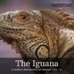 the iguana | alittleperspective.com