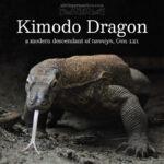 kimodo dragon | alittleperspective.com