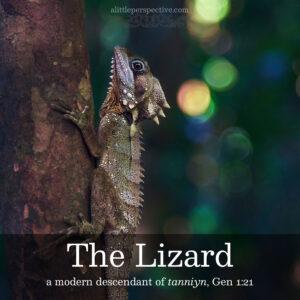 the lizard   alittleperspective.com