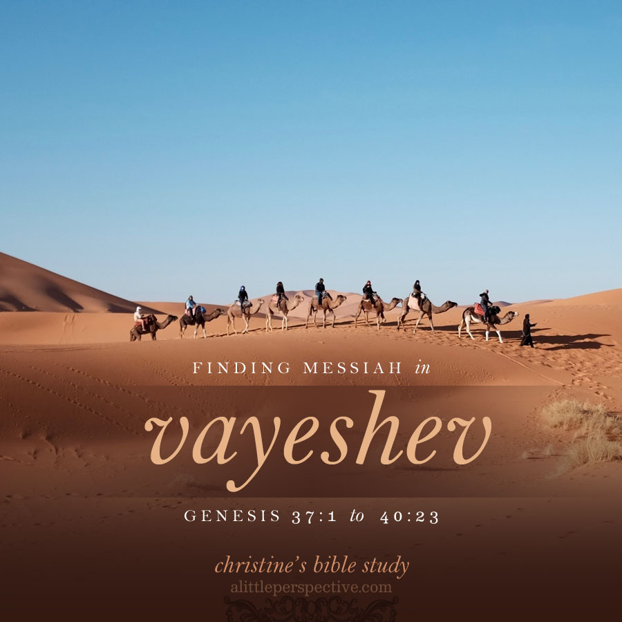 finding messiah in vayeshev, genesis 37:1-40:23 | christine's bible study at alittleperspective.com