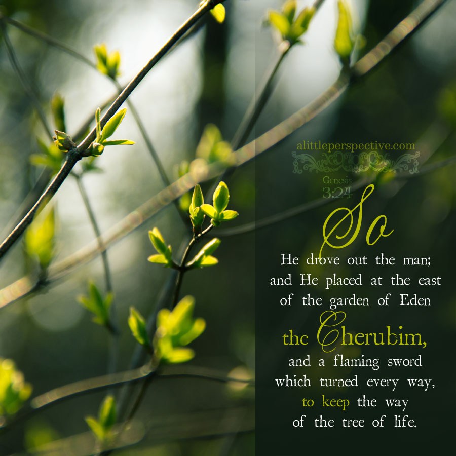 Gen 3:24 | scripture pictures @ alittleperspective.com