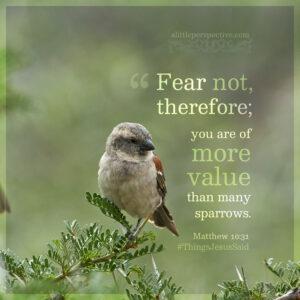 Mat 10:31 | scripture pictures @ alittleperspective.com