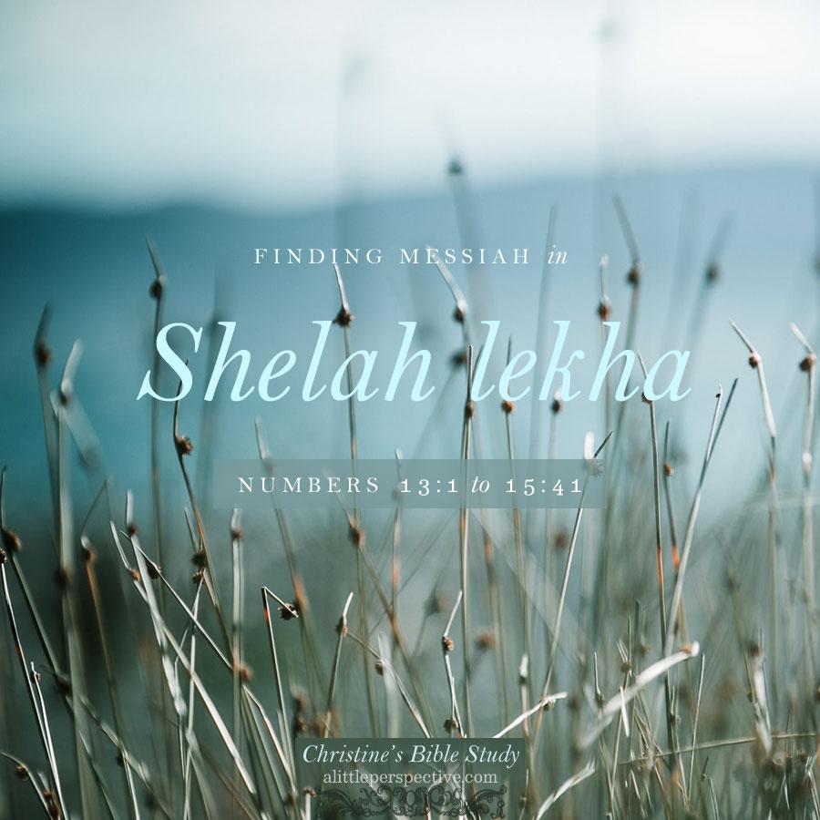 Finding Messiah in Shelah lekha | christine's bible study @ alittleperspective.com