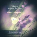 Ecc 9:4 | Scripture Pictures @ alittleperspective.com